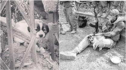 Soldaat haalt puppy uit het puin maar in feite redden ze elkaar