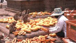 Buurtbewoners voederen aapjes, nu die geen eten meer krijgen van toeristen