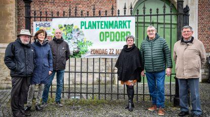 Na annuleren openingsreceptie Lente Op den Dries: ook plantenmarkt zal niet doorgaan
