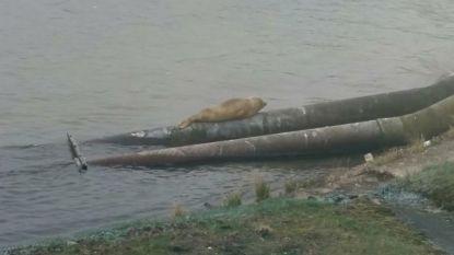 Daar zijn zeehond en bever weer