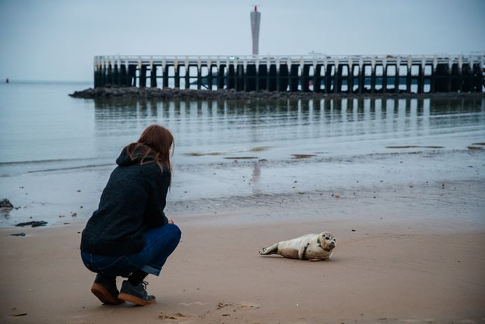 Een hemeltergend zicht: mensen komen vaak veel te dicht bij zeehonden en dat is nefast voor hun rust.