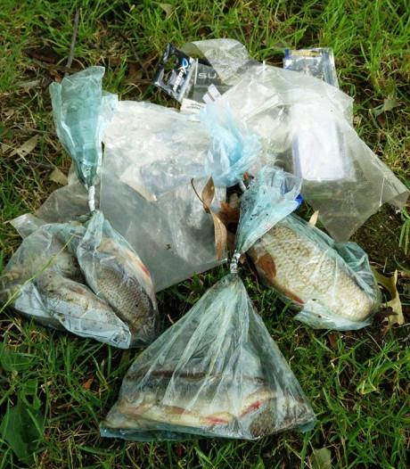 Levende vissen in boterhamzakjes gestopt in Rijssen