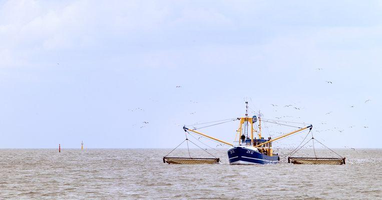 Vissersboten in de haven van Lauwersoog.  Beeld ANP XTRA