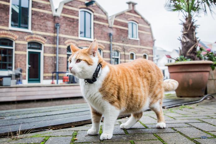 katthalsband gps