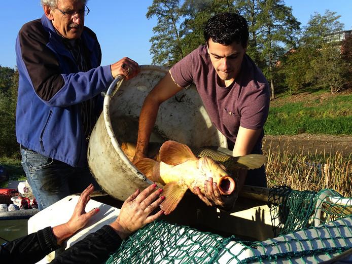 Voorzichtig worden de vissen weggehaald uit de grotendeels droog gevallen Laak bij Rheden bevrijd.