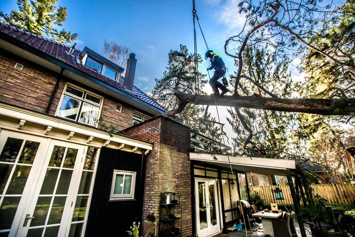 Mannen van boomverzorger Bouwmeester halen een omgevallen boom weg. Jachtlaan 20, Apeldoorn.