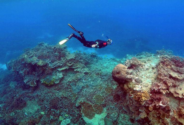 Maar liefst tweederde van het Groot Barrièrerif (foto) zou te maken hebben met 'verbleking' van het koraal.