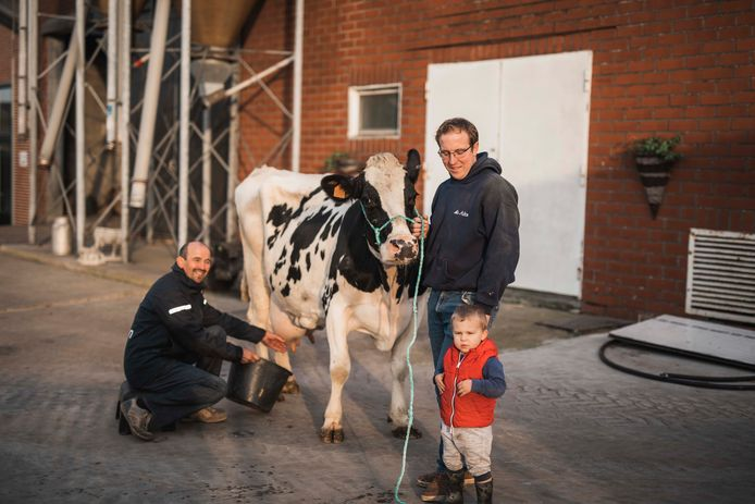 Dominique en zijn zoon Peter hebben een 14-jarige melkkoe die heel veel melk produceert. Kleinzoon Giel komt mee op de foto.
