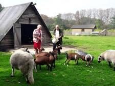 Geitjes en schapen krijgen nieuw dak in Etten-Leur