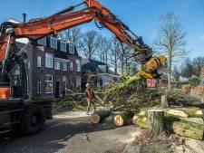 Breda kan door met kappen bomen Bavelselaan
