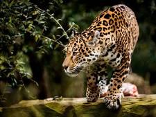 Terugschroeven aantal diersoorten Artis onderzocht
