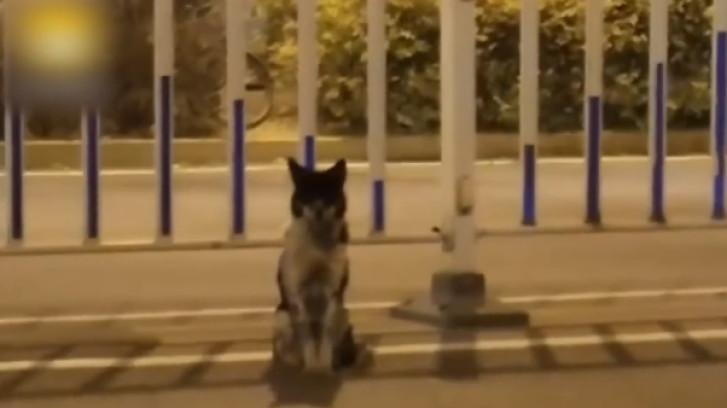 Rouwend hondje houdt al 80 dagen de wacht aan drukke weg waar baasje stierf