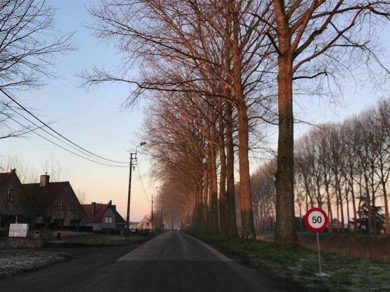 De komende week worden de bomen langs de Moershoofdeweg gerooid.