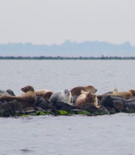 Zeehonden spotten? Dat kan met deze tocht die vertrekt uit Ouddorp