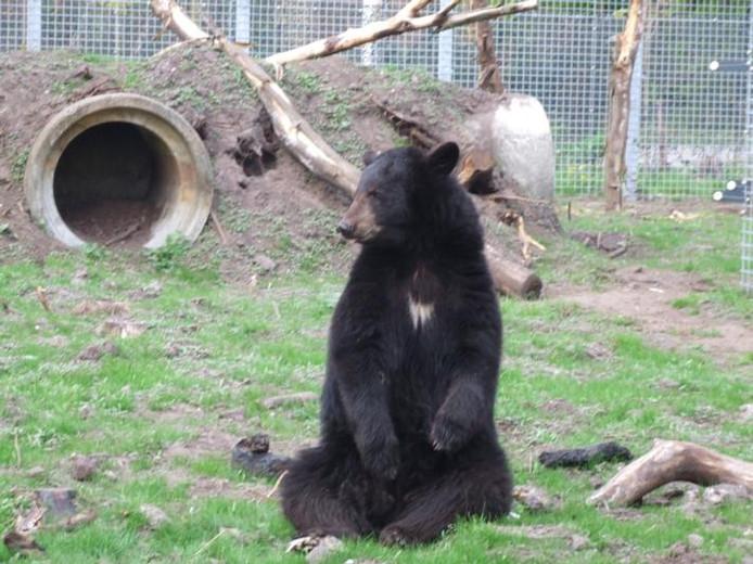 Een van de nieuwe bewoners van dierenpark Zie-Zoö in Volkel