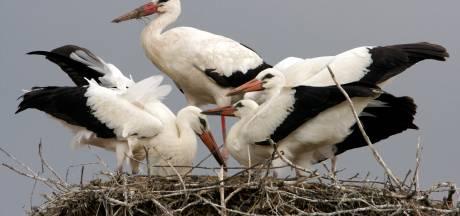 Liefdesleven vogels weer te volgen via de camera