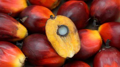 """""""Palmolie is een godsgeschenk"""": Maleisië gaat in tegen wereldwijde kritiek met nieuwe slogan"""
