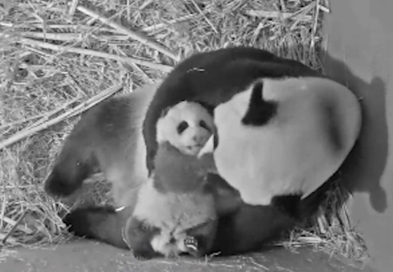 Wu Wen en baby Fan Xing vanuit het kraamhol.