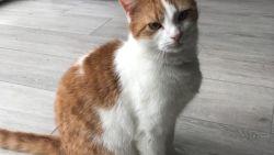 """""""Hoe laf is dit?"""": kat Frostie beschoten met loodjesgeweer in Lauwe"""
