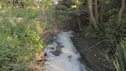 """Gemeente onderzoekt vervuiling en vissterfte  in de Velpe: """"Het is de zoveelste vervuiling op dezelfde plek"""""""