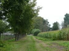 Meierijstad begrijpt boze bewoners Achterste Hermalen over snelle bomenkap 25 beuken