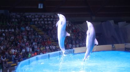 Weyts wil dolfijnen weg uit Brugge