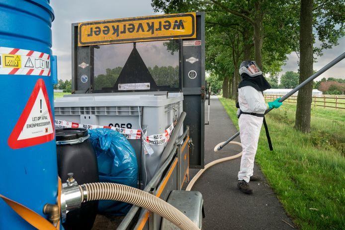 Gemeenten zijn momenteel druk in de weer met het bestrijden van de eikenprocessierups, vooral op openbare wegen.