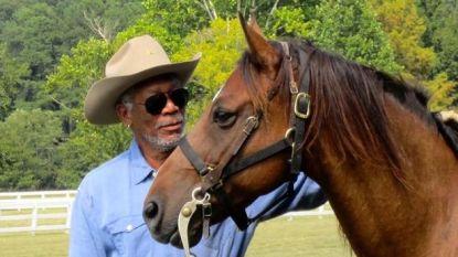 Van acteur tot imker: Morgan Freeman laat zijn domein ombouwen tot 'bijenheiligdom'