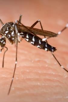 'Nederlandse vrouw loopt in Zuid-Frankrijk dengue op door tijgermug'