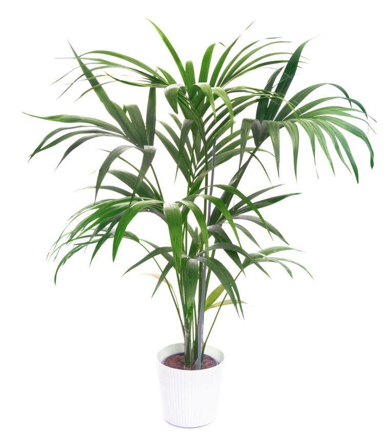 Bezig zijn met planten werkt rustgevend Beeld