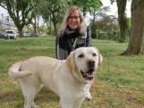 Kun je door corona je hond niet uitlaten? Veel vrijwilligers helpen graag