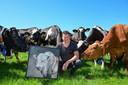 Oude fokstier 'Barack' wordt 12,5 en heeft al bijna 100.000 nakomelingen geproduceerd. Eigenaar Gerco van Engelen met een schilderij van de stier.