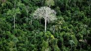 Burger King opent vestiging in Amazonewoud en wetenschappers zijn in alle staten