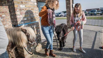 Pony's strelen en kermis bij opening kinderdagverblijf 't Stationnetje