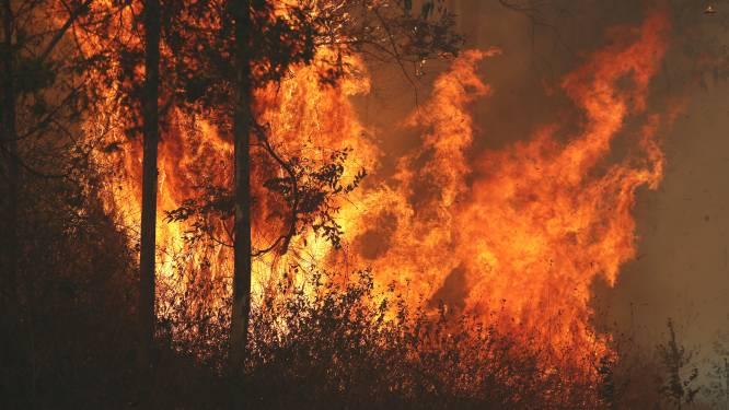 """""""Verwoestende bosbrand Australië aangestoken"""""""