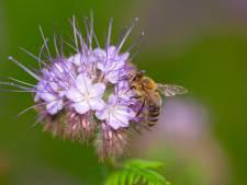 Zonnepark in Almelo krijgt bewoners: honderdduizenden bijen
