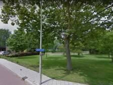 Bomen in Gouda bespoten met gif
