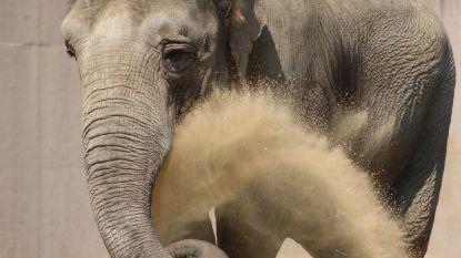 """Olifanten Planckendael verliezen hun """"felle"""" matriarch"""