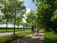 Hilvarenbeek tegen kap bomen bij herinrichting N395