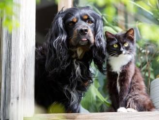 Katten en honden krijgen hun eigen Facebook