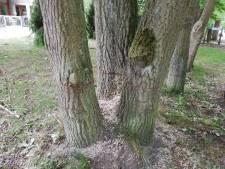 Plus de 100 chênes vandalisés à la tronçonneuse