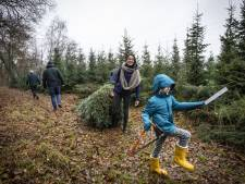 Zelf je kerstboom omzagen? Dat kan in Deurningen:  'Het zijn nogal flinke joekels'