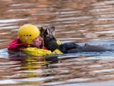 Spectaculaire reddingsactie redt ree van verdrinkingsdood