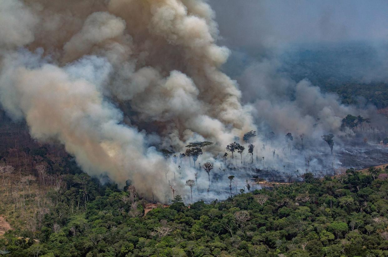 Het Amazonewoud brandt in de Braziliaanse deelstaat Rondonia.