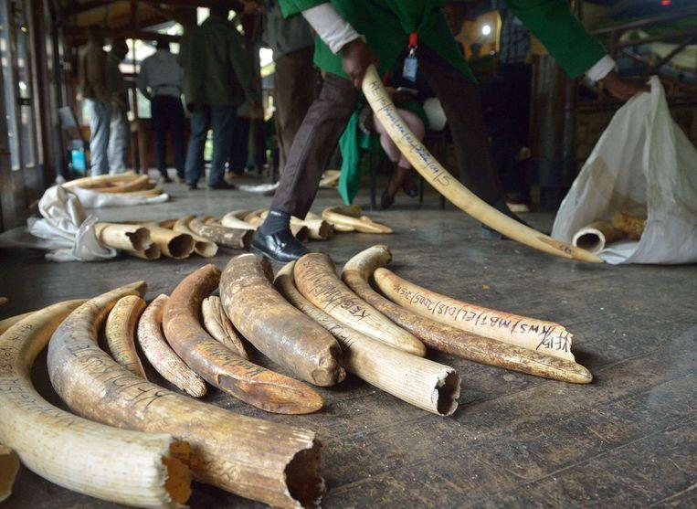 Een partij onderschept illegaal ivoor in Nairobi. Beeld null