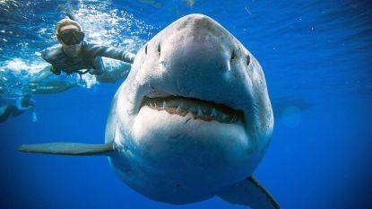 """Ongelofelijke zwempartij met één van de meest legendarische wezens op aarde: """"Ik dacht dat mijn hart zou ontploffen"""""""