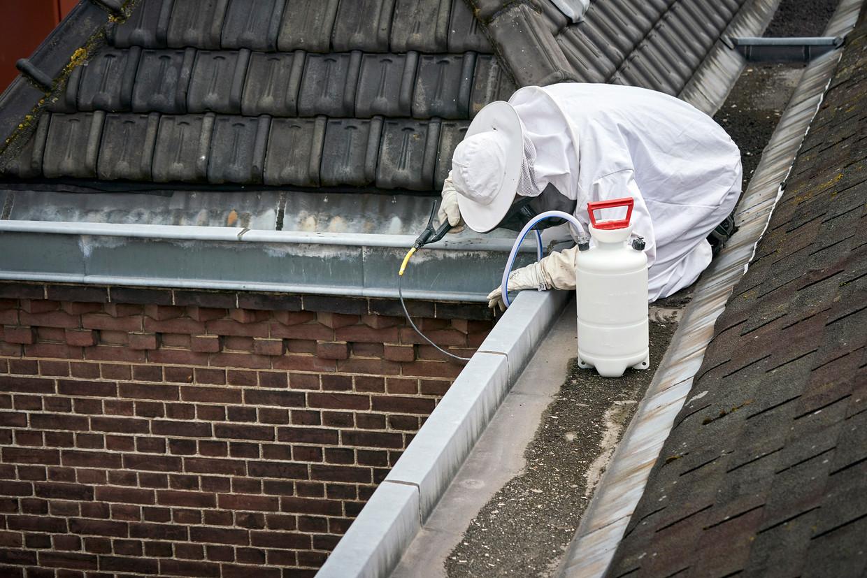 Een wespenbestrijder bezig met het verdelgen van een wespennest onder een dakgoot.