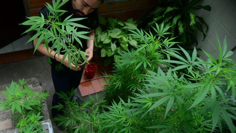 De consumptie van cannabis en ecstasy zit weer in de lift.