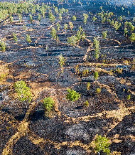 Bijna duizend hectare in vlammen op, vooral in Brabant was het dit jaar raak