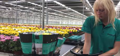 Vloggen vanuit de kas: 'Een bijbaan in de glastuinbouw is chill'